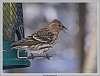 2016-03-02-feeders critters