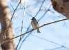 Birding with a DA*50-135