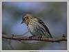 2016-03-13-Todays-feeder-birds