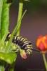 Butterflies and birds