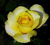 Buttery Yellow...........