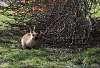 A bunny (SFW)