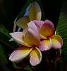 Summer colour lingers..........