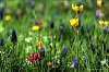 Spring flowers - DOF
