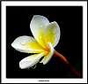 A  single bloom.............