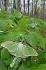 A few Butterflies (& one moth)
