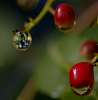 Wet Berries reveal a scene..........