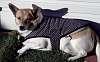Soooooooooo cold I needed my jacket on today.........