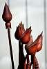 Wooden Tulips........