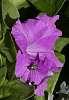 Purple & Green.........