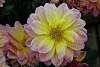 Macro Flower Photograph.