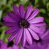 A little Purple beauty.........