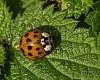 A ladybird day