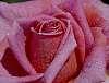 A close Look........