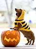halloweenie? bumbleweenie? handsome!