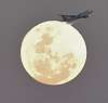 My supermoon photo