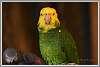 Bird Kingdom, Niagara Falls, pt-1 parrots