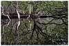 Mangrove Mirror