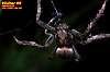 Orb Weaver ( SPIDER )