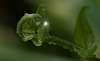 Alien Plant..............