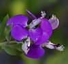 Very pretty in Purple.........