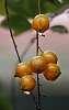 Rain soaked Berries.................