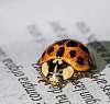 A Ladybird reader?