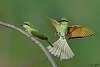 A few shots of bird in flight (shot with K1, K3, K5)