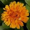 A splash of Orange........