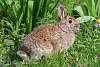 Wildlife-Non Squirrel Furry Animal Thread