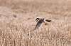 What kind of blur is this? Kestrel BIF