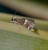 A tiny Moth..............