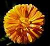 A taste of Orange............
