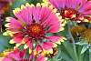Pinwheel Flowers.