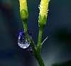 Scene in a Drop.............