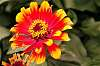 Pretty Red and Yellow Flower.