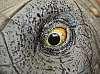 Eyeball-to-Eyeball . . . . . . . .