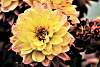 An awesome looking flower. :))