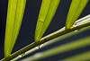Green Angles........