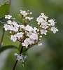 A Bouquet.............