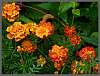 Garden Flower Clusters