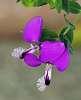 Tasty Purple...............