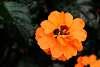 Orange Blossom Time?