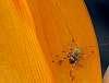 Orange Leaf.............