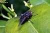 Aaaaargh !  Those flies !