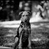 Schutzhund Fashionista