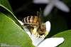 In deep pollen