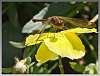 Deck photos, Morning glory and Dragonfly