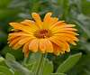 A lush vibrant Orange..............