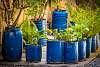 Ex Olive Oil... Now Flowerpots
